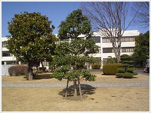 庭園管理請負【訪問サービス】